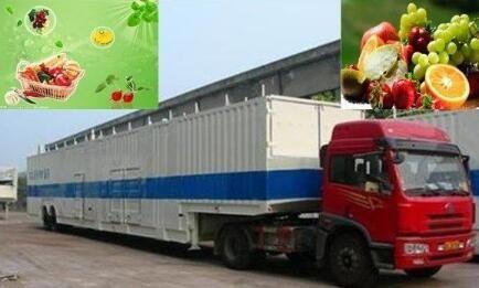 高品质蔬菜运输价格 冷链运输 我们推荐专业的菌类航空运输价格服务商