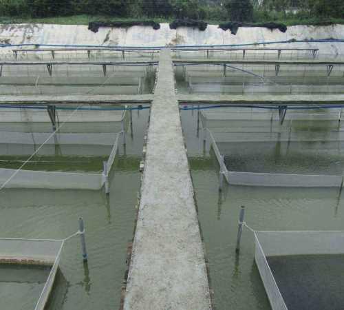 特种水产养殖网 零污染水产品货源提供哪里找 资阳市惠丰水产专业合作社