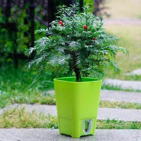 我们引荐绿植高兴树零售德律风厂家直销 买红豆杉盆景 安康树