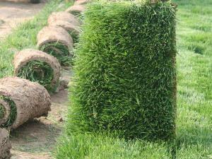 绿化草坪每平米价格_割草机相关