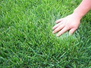 真草坪每平米价格_割草机相关