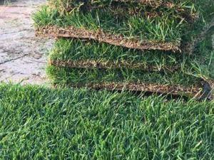 足球場草皮種植供應_優質草坪