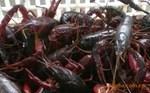 成品小龙虾多少钱一斤 宜城市火红小龙虾养殖基地