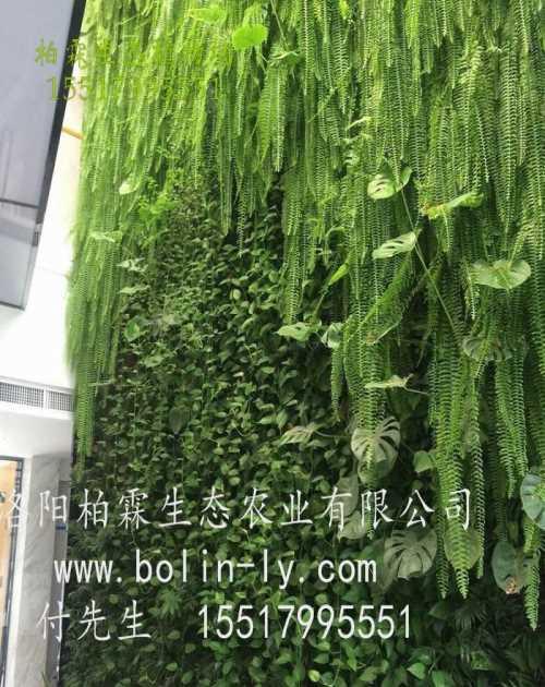仿真植物墙/屋顶垂直绿化公司哪家好/洛阳柏霖生态农业有限公司