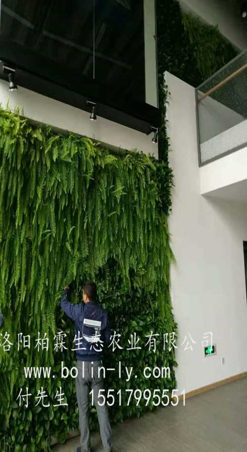 阳台立体绿化公司 阳台垂直绿化施工 洛阳柏霖生态农业有限公司
