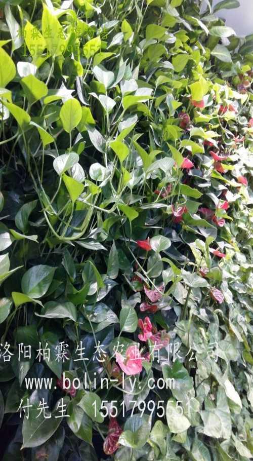 河南垂直绿化设计_会议室立体绿化墙_洛阳柏霖生态农业有限公司
