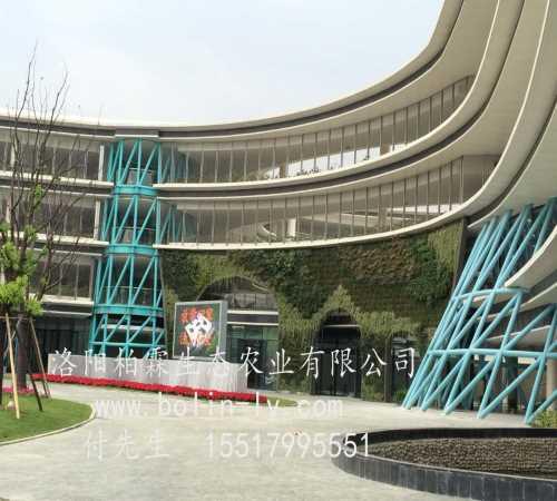 会议室垂直绿化植物墙-真植物墙图片-洛阳柏霖生态农业有限公司