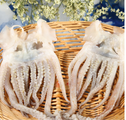 正宗魷魚價格 秘制去骨鴨掌配送 雙流區明利水產經營部