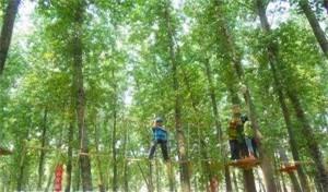 景区丛林穿越设计施工_景区其他游艺设施