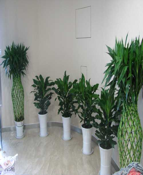 重庆市鲜花绿植租赁公司地址-重庆鲜花绿植租赁公司电话-专业鲜花绿植租赁