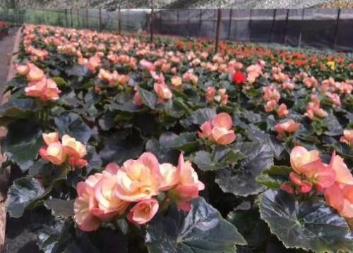 多肉植物怎么养-云南鲜花盆栽批发-昆明四季长青花卉有限公司