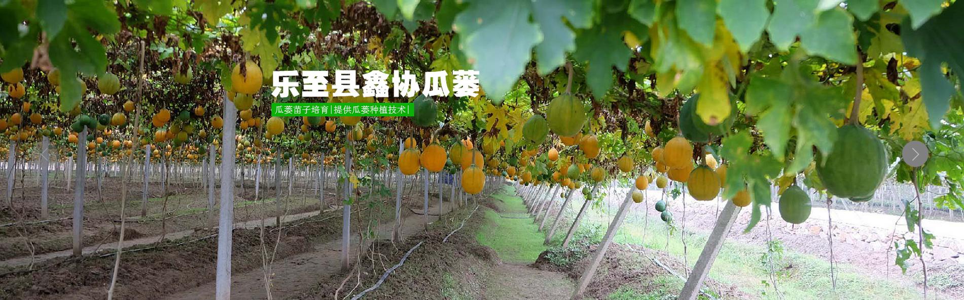 黄精种苗价格 自贡鑫协瓜蒌位置 乐至县鑫协中药材专业合作社