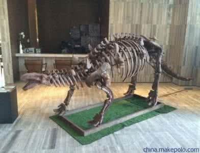 传神恐龙化石价钱 公仔摆件联络方法 大安区兴利玻璃钢成品厂