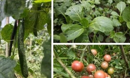奉节蔬菜采摘哪里好-重庆景点奉节天坑地缝门票价格-奉节县耕植农业发展有限公司