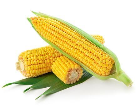 优质玉米批发零售-陕西渭南天顺农产品厂家-渭南天顺农产品商贸有限公司