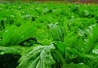 昆明近郊无公害蔬菜种植体验园 特色农家乐哪里好玩 昆明青塘农业科技有限公司