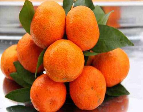 新鲜沙糖桔批发_新鲜红心蜜柚好多钱一斤_成都宇昊电子商务有限公司