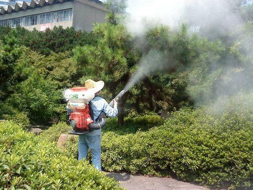 小区绿化养护公司-密枝红叶李哪里有卖-郫县紫苑园艺场