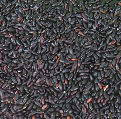 四川黑香米哪家好/优质薏米吃法/双流区栖博食品商贸部