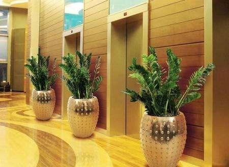 【AG环亚真人游戏】长沙市望城区花卉租摆租赁服务