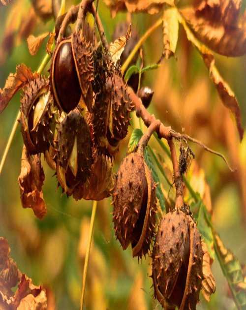 稀有果树种植 云南古树茶叶品尝 和田农场
