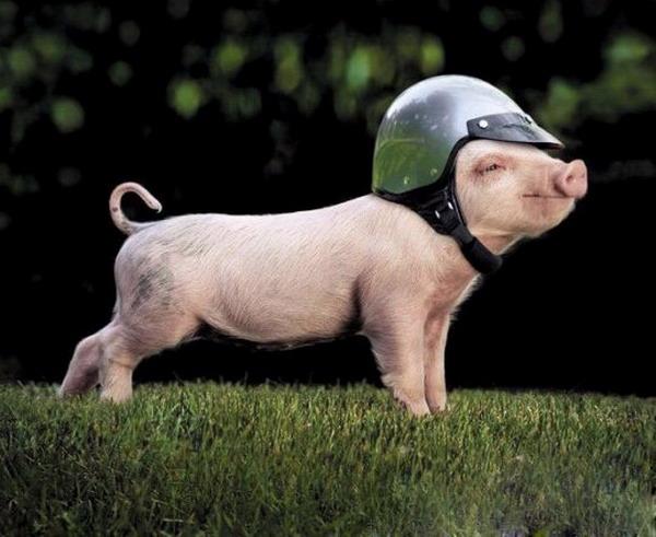 舟大师送东风让猪飞